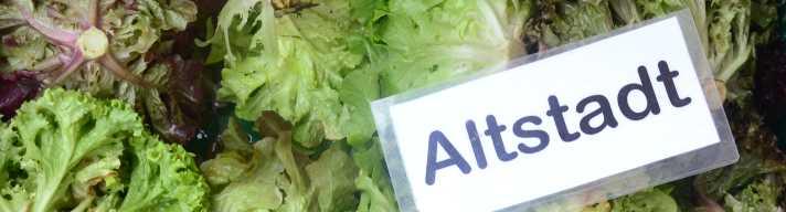 SoLaWi Salat für das  Depot Altstadt