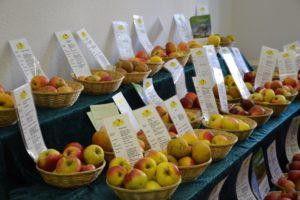 Apfelvielfalt der BioStation