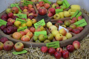 Apfelvielfalt