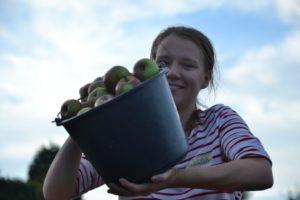 junge Frau mit vollem Apfeleimer