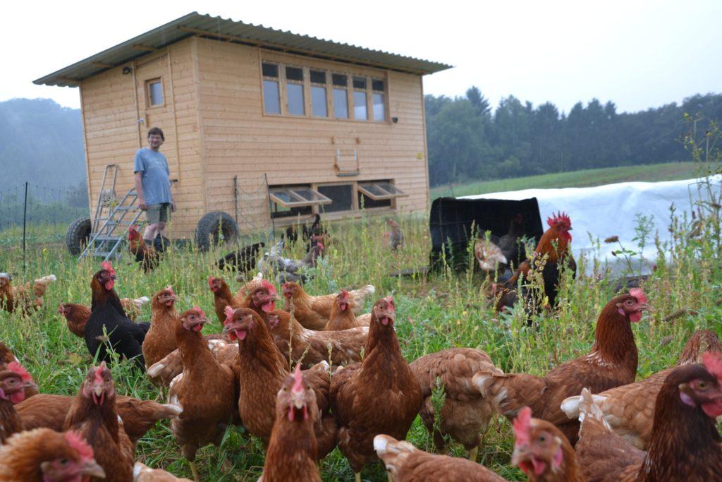 Ehemaliges Hühnermobil SoLaWi Bonn