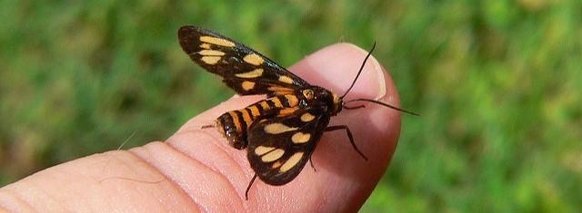 Schmetterling sitzt auf Finger