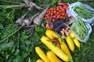 Ernte im Gemeinschaftsgarten Zucchini Bohnen Rote Beete Tomaten