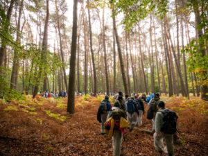 Aktivistinnen gehen durch den Wald