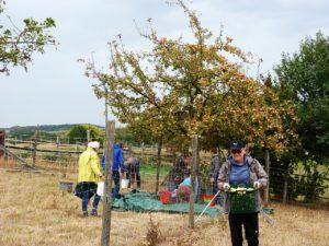 Menschen zwischen Bäumen sammeln Äpfel