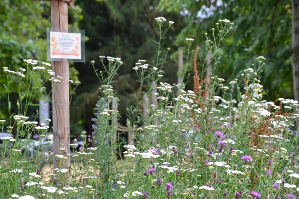 Blühweise und Bonn blüht Schild