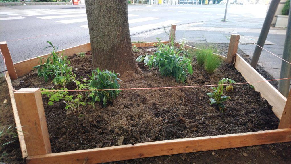 Baumbeet im Mackeviertel mit 5 Pflanzen und Holzumrandung -quer