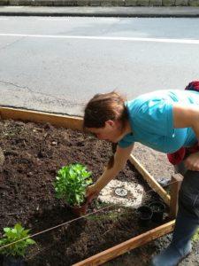 Frau kümmert sich um eine frisch bepflanzte Baumscheibe