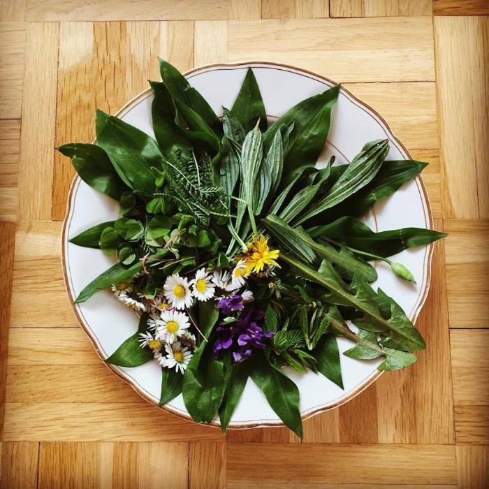 Teller mit Wildpflanzen