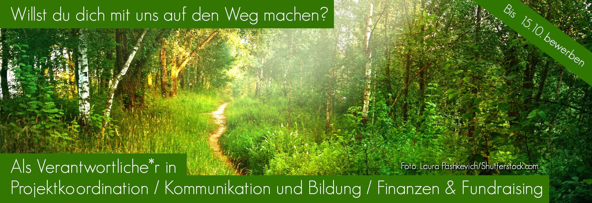 Sonniger Weg in Mischwald- Willst du dich mit uns auf den Weg machen-als Verantwortlicher in Projektkoordination+Kommunikation+Finanzen, Foto-Laura Pashkevich-Shutterstock